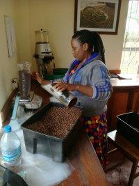 Foto fra kaffefarm tæt ved Arusha